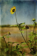 Melany Sarafis Digital Art Posters - Textured Sunflower Poster by Melany Sarafis