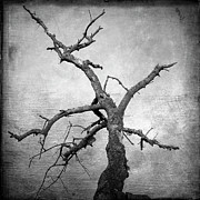 Bare Tree Posters - Textured tree Poster by Bernard Jaubert
