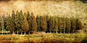 Land World Framed Prints Framed Prints - Textured Trees Framed Print by Linde Townsend