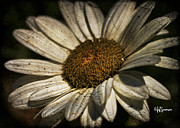 Jeff Swanson Metal Prints - Textured White Flower Metal Print by Jeff Swanson