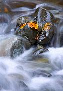 Rocks Art - Textures of Autumn by Mike  Dawson