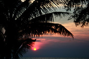 Mimosa Tree Leaf Framed Prints - Thai Sunset on Koh Kut 1 Framed Print by Jennifer  Bright