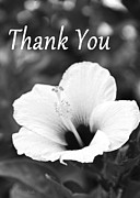 Floral Greeting Card Posters - Thank You - Hibiscus Black and White Poster by Kerri Ligatich