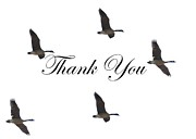 Dessie Durham Art - Thank You Card Canadian Geese by Dessie Durham