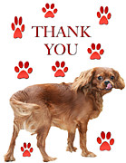 Paw Prints Digital Art - Thank You For Dinner Card by Daphne Sampson