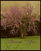 Crab Apple Framed Prints - Thank You in Spring Framed Print by Mindy Newman