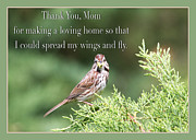 Inspirational Saying Photos - Thank You Mom Sparrow Bird Card by Daphne Sampson