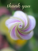 Inside You Posters - Thank You Poster by Tina Marie