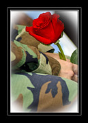 Single Rose Stem Photos - Thank You Veteran by Carolyn Marshall