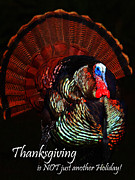 Thanks Posters - Thanksgiving is NOT just Another Holiday - Painterly Poster by Wingsdomain Art and Photography