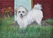 White Dogs Pastels Framed Prints - That Little White Dog Framed Print by Reb Frost