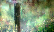 Fence Post Photos - That Place Between Awake and Asleep by Robin Webster