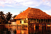 Gathering Photos - Thatched roof Placencia by Thomas R Fletcher