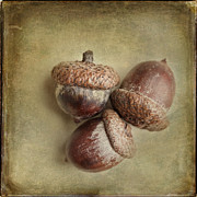 Taupe Prints - The Acorns Print by Lisa Russo