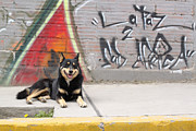 Geraint Rowland - The Alsatian in La Paz