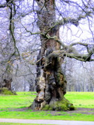 London England  Digital Art - The Ancient Trees of London by Mindy Newman