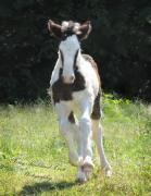 Terry Kirkland Cook - The Angel Filly