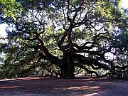 Old Tree In Charleston Prints - The Angel Oak in Charleston SC Print by Susanne Van Hulst