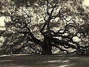 Black And White Photos Framed Prints - The Angel Oak Framed Print by Susanne Van Hulst
