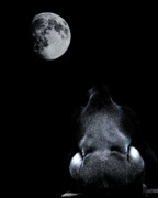Primates Prints - The Ape and The Moon . Photoart . R7917 Print by Wingsdomain Art and Photography