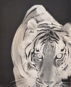 The Tiger Drawings - The Approach by Daniel Torres