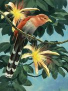 Cuckoo Prints - The Artist Shows A Squirrel Cuckoo Print by Walter A. Weber
