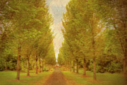 Adare Acrylic Prints - The Avenue Tree Lined Path Adare Ireland Acrylic Print by Mark Richards