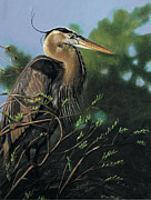Heron Pastels - The Bachelor by Deb LaFogg-Docherty