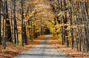 Bare Trees Metal Prints - The Back Road in Autumn Metal Print by Louise Heusinkveld