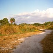 Rosemary Hawkins Prints - The Bailey Tract Nature Preserve Sanibel Island Print by Rosemary Hawkins