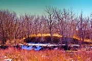 Stream Prints - The Banks of the South Platte River Print by David Patterson