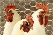 Chicken Paintings - The Barnyard Bouncers... by Will Bullas