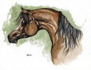 Horse Drawing Posters - The Bay Arabian Horse 12 Poster by Angel  Tarantella