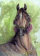 Horses Drawings - The Bay Arabian Horse 16 by Angel  Tarantella