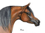 Profile Drawings Posters - The Bay Arabian Horse 18 Poster by Angel  Tarantella