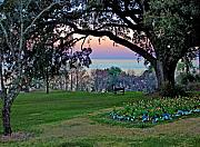Fairhope Prints - The Bay View Bench Print by Michael Thomas