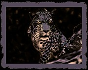 Critters Digital Art Framed Prints - The Beauty of a Leopard Framed Print by Tisha McGee
