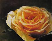 Yellow Leaves Pastels Prints - The Beauty of a Rose Print by Sabina Haas