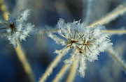 Ice Crystals Framed Prints - The Beauty of Winter Framed Print by Ellen Lacey