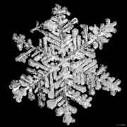 Snowflake Posters - The Beauty of Winter Poster by Lauren Radke