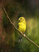 Backyard Goldfinch Digital Art Posters - The Beauty Of Youth Poster by J Larry Walker