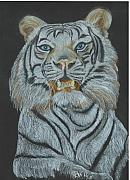 White Pastels Metal Prints - The Bengal Metal Print by Carol Wisniewski
