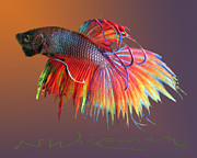 Tropical Fish Mixed Media Posters - The Betta Poster by Neal Wiseman