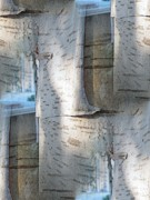 Birch Bark Tree Prints - The Birch Print by Tim Allen