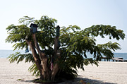 Md Digital Art - The Birdhouse Tree on the Beach by Bill Cannon