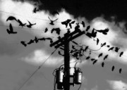 Telephone Pole Prints - The Birds Print by David Lee Thompson