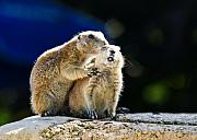 Groundhog Photos - The Bite by Edward Myers
