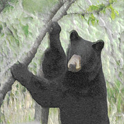 Black Bear Photos - The Black Bear by Ernie Echols