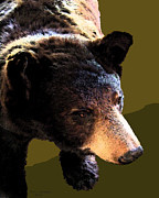 The Black Bear Print by Tam Ishmael - Eizman