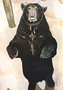 Terry Forrest - The Black Bear